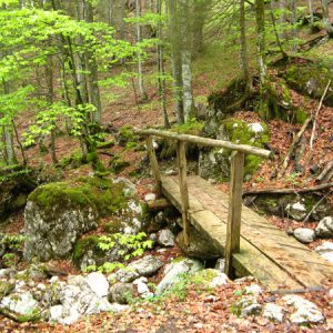 Waldwege mit Brücken
