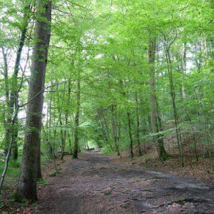 Waldwege nach Wolfratshausen