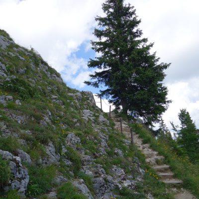Gratweg nach dem Brauneck