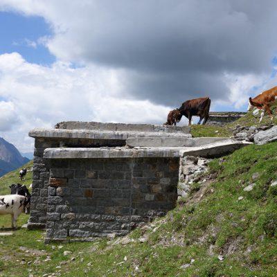 Die Kühe, die uns unsere Brotzeit streitig machen wollten