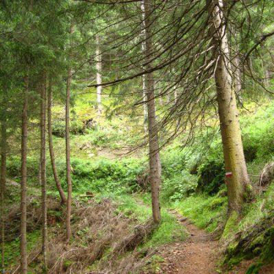 Der lange Weg bergauf durch den Wald