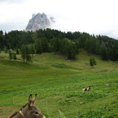 Esel und Minipony auf unserem Weg