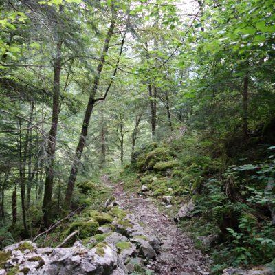 Über Waldwege ins Tal