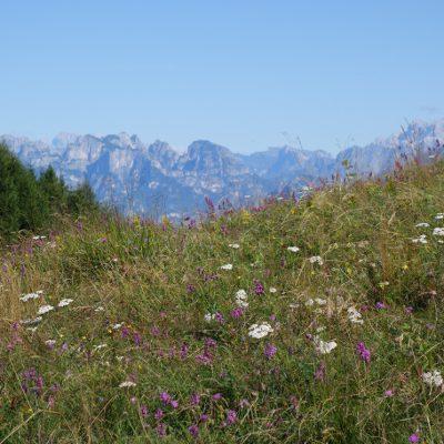 Ein sdf Blick zu den Dolomiten