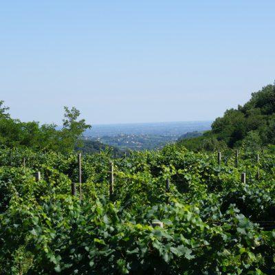 Geprägt von Wein und einem wunderschönen Ausblick