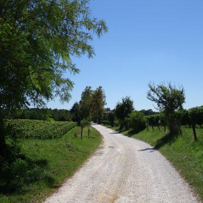 Immer wieder Wein und Felder