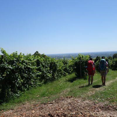 Vom letzten Weinhügel runter zur Piave