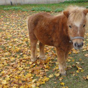 Süße Zuschauer auf dem Weg: Pony ...