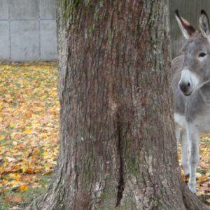 ... und Esel