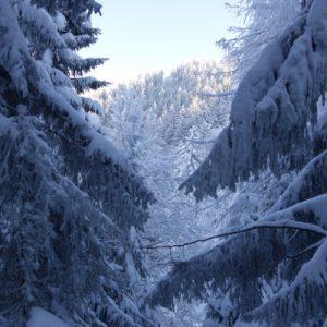 Schnee in den Bäumen