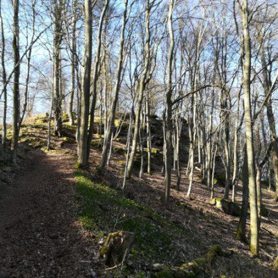 Weg zum Drachenfels