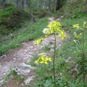 Viele Blumen am Wegesrand