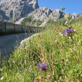 Sextner Dolomiten: Rotwandwiesenhütte – Moos – München